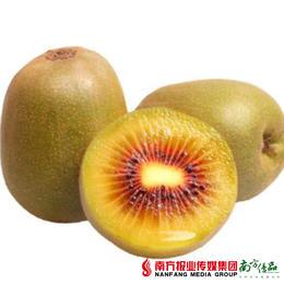 【全国包邮】红心猕猴桃12个/箱 (单果70-90克)(72小时内发货)