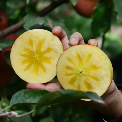 [阿克苏糖心苹果 ]清甜脆爽  果香浓郁  8斤装 商品图3