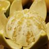 [平和葡萄柚] 皮薄多汁 清甜爽口    4-6个/箱(净重4.5-5斤) 商品缩略图1