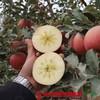 【全国包邮】新疆阿克苏冰糖心苹果(72小时内发货) 商品缩略图3
