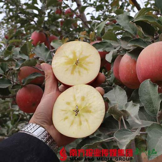 【全国包邮】新疆阿克苏冰糖心苹果(72小时内发货) 商品图3