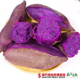 【全国包邮】云南紫薯 中大果  5斤±3两/箱(单果150克+)(72小时内发货)