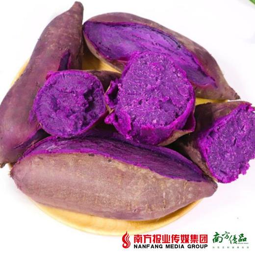 【全国包邮】云南紫薯 中大果  5斤±3两/箱(单果150克+)(72小时内发货) 商品图0