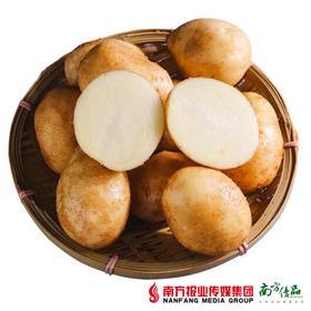 【全国包邮】黄皮土豆 5斤±3两/箱(72小时内发货)