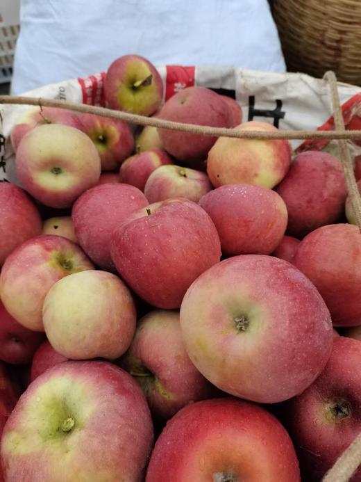 【半岛商城】老树糖心苹果 可以媲美新疆阿克苏的苹果 无农残孕妇小孩放心吃! 商品图2