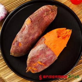 【全国包邮】六鳌蜜薯 5斤±3两/箱 (20-30个)(72小时内发货)