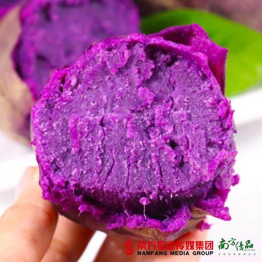 【全国包邮】云南紫薯 中大果  5斤±3两/箱(单果150克+)(72小时内发货) 商品图3