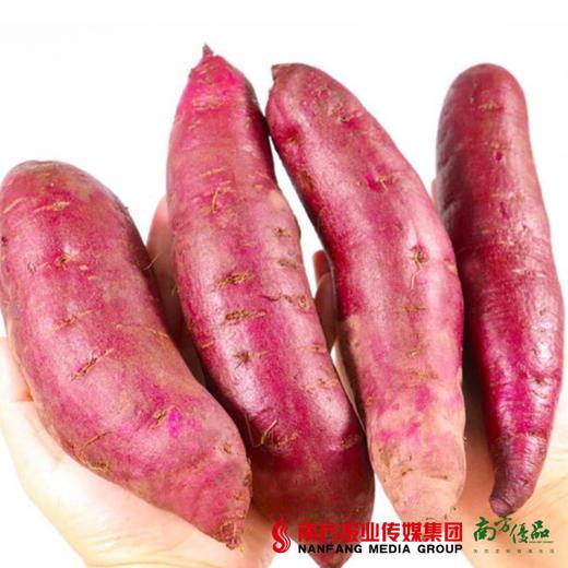 【全国包邮】云南紫薯 中大果  5斤±3两/箱(单果150克+)(72小时内发货) 商品图2