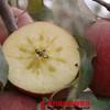【全国包邮】新疆阿克苏冰糖心苹果(72小时内发货) 商品缩略图1