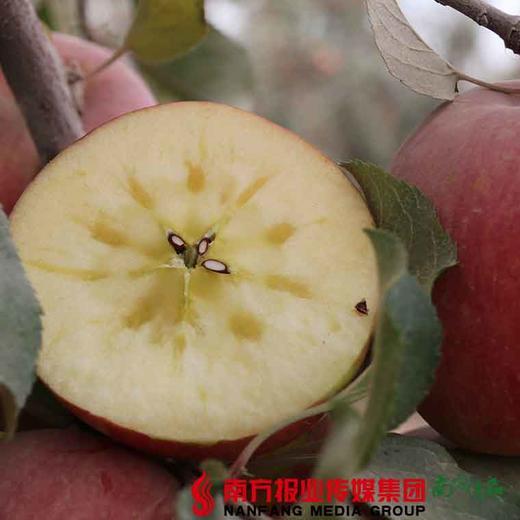 【全国包邮】新疆阿克苏冰糖心苹果(72小时内发货) 商品图1