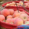 【全国包邮】新疆阿克苏冰糖心苹果(72小时内发货) 商品缩略图2