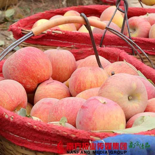 【全国包邮】新疆阿克苏冰糖心苹果(72小时内发货) 商品图2