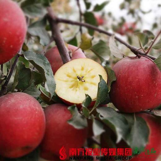 【全国包邮】新疆阿克苏冰糖心苹果(72小时内发货) 商品图4