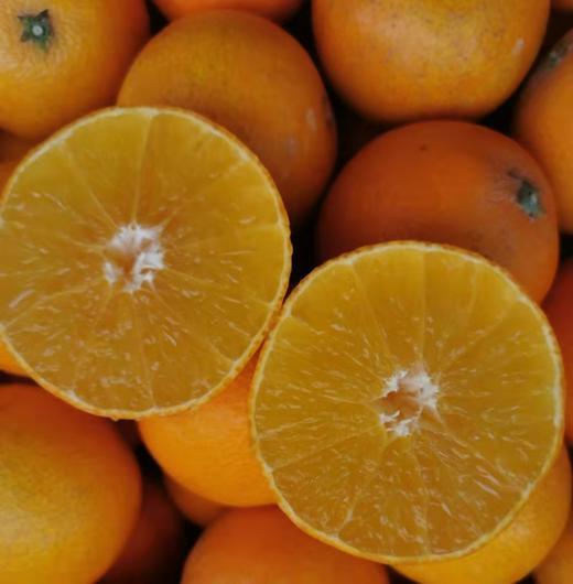 【半岛商城】柑橘爱媛28号红美人甜橙 5斤装/10斤装 商品图0