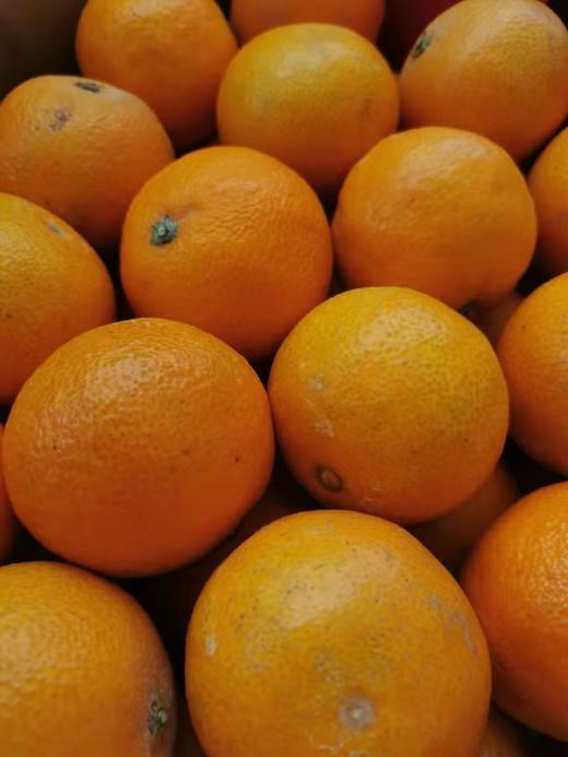 【半岛商城】柑橘爱媛28号红美人甜橙 5斤装/10斤装 商品图2