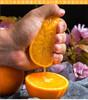 精选 | 秭归脐橙纽荷尔香橙 不打蜡 果肉饱满多汁 果园现摘现发 商品缩略图1