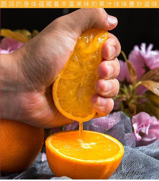 精选 | 秭归脐橙纽荷尔香橙 不打蜡 果肉饱满多汁 果园现摘现发 商品图1