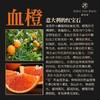 松竹芳血橙五件(精华) 商品缩略图4