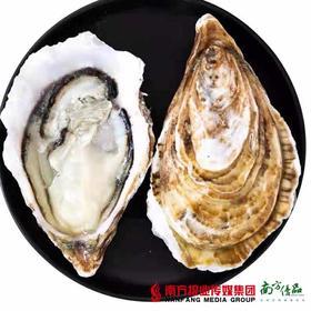 【全国包邮】正宗乳山生蚝新鲜直发  5斤±3两/箱(72小时内发货)