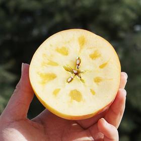 香甜脆爽的新疆阿克苏冰糖心苹果  汁多皮薄 肉厚核小 5斤/8.5斤装 | 基础商品