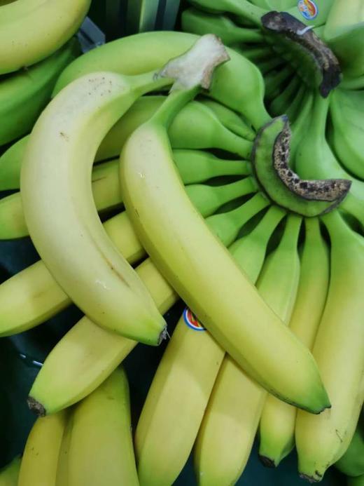 【半岛商城】南美香蕉4斤装/8斤装 自然熟健康蕉 味道浓郁 醇厚 感绵密香甜 商品图0
