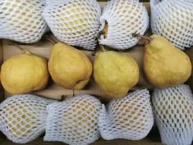 【半岛商城】闻登丑梨(中华丑梨)12枚 约6.2-6.3斤 硬吃甜脆,放软冰淇凌口感的梨,口感软绵