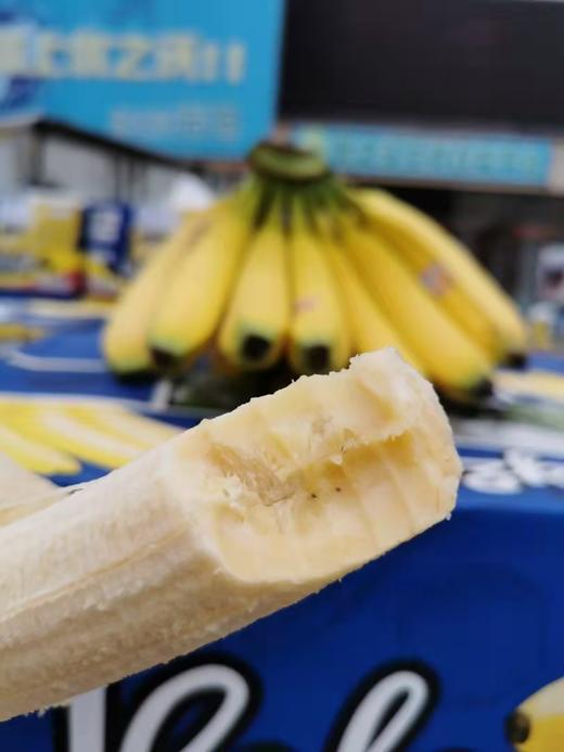 【半岛商城】南美香蕉4斤装/8斤装 自然熟健康蕉 味道浓郁 醇厚 感绵密香甜 商品图4