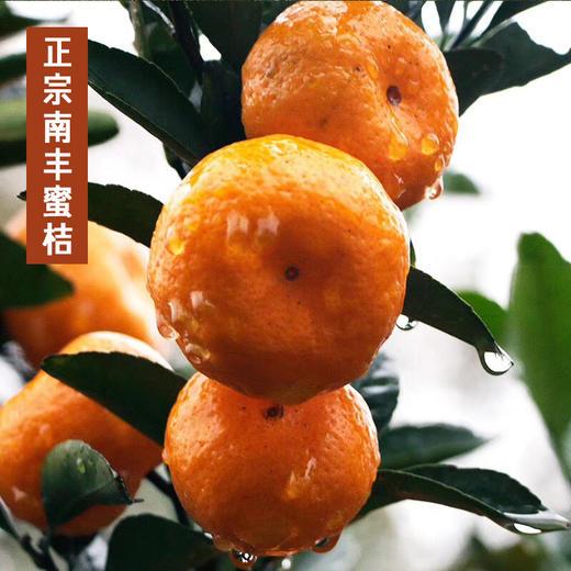 江西南丰蜜桔  甜小贡桔 当季新鲜水果  甜蜜多汁  产地直供 商品图2