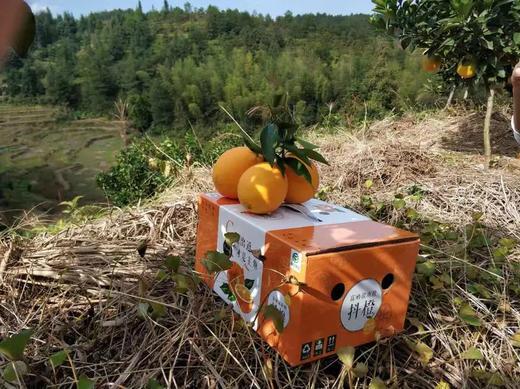【新鲜脐橙】江西赣州  赣南脐橙8斤装 新鲜当季甜橙赣南脐橙 商品图5