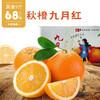 九月红秋橙 果重9斤【三峡特产】秭归秋橙九月红!橙香满溢!汁多甘甜!口感鲜嫩!绿色有机 商品缩略图5
