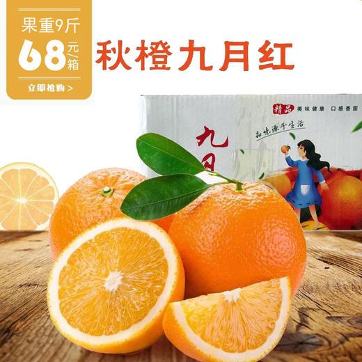 九月红秋橙 果重9斤【三峡特产】秭归秋橙九月红!橙香满溢!汁多甘甜!口感鲜嫩!绿色有机 商品图5
