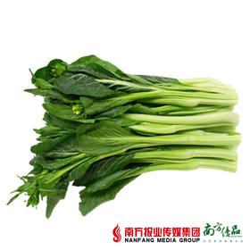 【珠三角包邮】连州菜心  5斤±50g/箱 (11月28日到货)