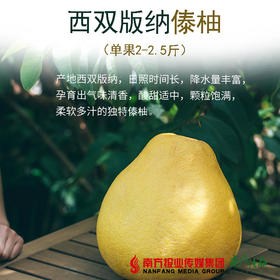 【全国包邮】云南西双版纳傣柚 (单果2-2.5斤)(72小时内发货)