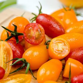 双色樱桃小番茄   口感脆甜酸甜适中  现摘现发 2斤京东包邮