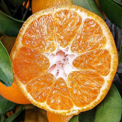 鲜嫩爆汁的椪柑 果粒颗颗饱满 柑味浓郁 产地采摘新鲜直达 3/5/9斤装 商品图4