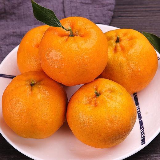 鲜嫩爆汁的椪柑 果粒颗颗饱满 柑味浓郁 产地采摘新鲜直达 3/5/9斤装 商品图0