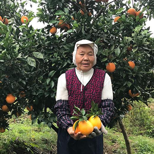 助农 | 秭归脐橙纽荷尔香橙 不打蜡 果肉饱满多汁 果园现摘现发 商品图0