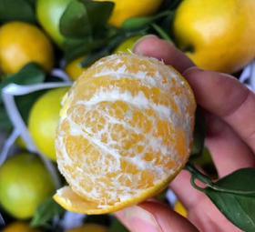 竹山当季新鲜水果新鲜现摘皇帝柑5斤