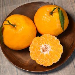 【半岛商城】春见耙耙柑 肉质脆嫩 多汁 清甜 现摘生鲜水果