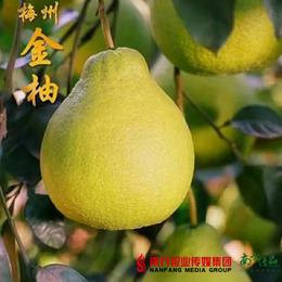【全国包邮】广东梅州金柚------梅州沙田柚(72小时内发货)