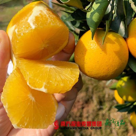 【全国包邮】冰糖橙 (60-65果)5斤±3两/箱(72小时内发货) 商品图3