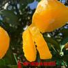 【全国包邮】冰糖橙 (60-65果)5斤±3两/箱(72小时内发货) 商品缩略图0