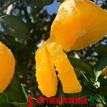 【全国包邮】冰糖橙 (60-65果)5斤±3两/箱(72小时内发货) 商品图0