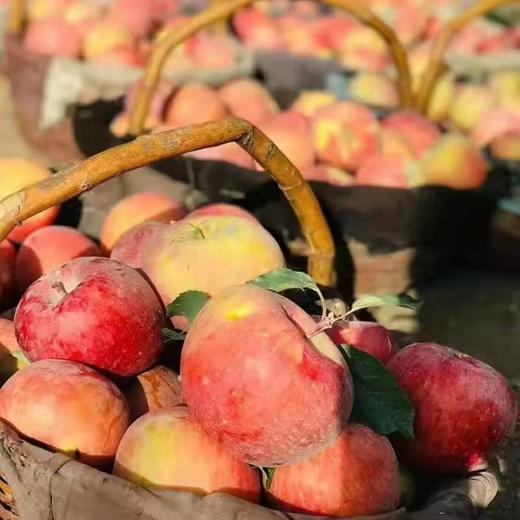 【半岛商城】新疆阿克苏苹果 毛重11斤 净重9.3斤以上 20枚果左右 80-85规格 商品图3