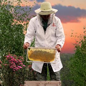 精选 | 山花土蜂蜜  便携独立小包装  432克(12克*36)