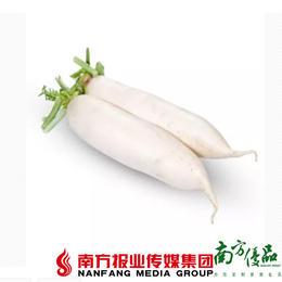 【珠三角包邮】连州高山萝卜 5斤±1两 (1月16日到货)