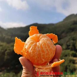 【全国包邮】正宗岭南无公害高山树熟砂糖橘 5斤±3两/箱(72小时内发货)