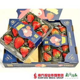 【珠三角包邮】友印象金色庄园红颜草莓  11-15颗/盒 2盒/箱(1月7日到货)