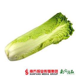 【珠三角包邮】连州竹筒白菜  5斤±50g/箱  (1月16日到货)