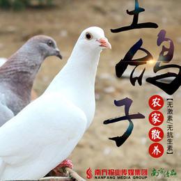【珠三角包邮】肉篮子 乳鸽2只 450g±50g/袋(1月22日到货)